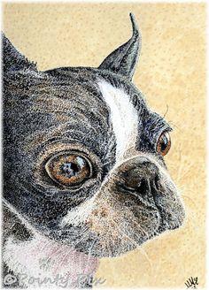 #petportraits Max, the Boston Terrier.   commission, watercolour #pointillism