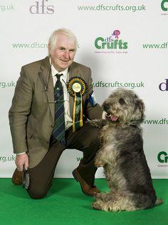 Crufts 2011 BOB Glen of Imaal terrier.