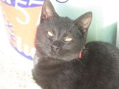#lovemycat #mili #bow #blackcat