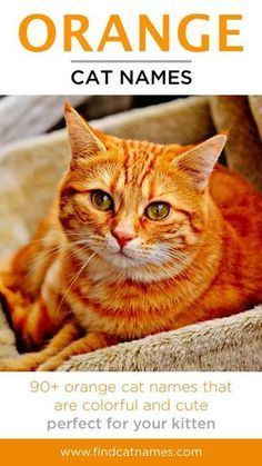 Orange Cat Names 150 Colorful Ideas Find Cat Names Tabby Cat Names Cat Names Boy Cat Names