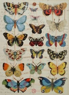 Lovely Victorian Scrap direct from Germany, waiting for your projects. Eighteen pieces (images) of German Scrap, as shown. Entire sheet measures about 9 x 6 inches x Slight raised embossed surface, glossy finish. Just clip them apart to use. Art Papillon, Butterfly Art, Butterfly Colors, Butterfly Embroidery, Butterfly Tattoos, Paper Butterflies, Vintage Butterfly Tattoo, Butterfly Species, Beautiful Butterflies