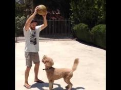 {video} Jensen playing basketball with his dog Oscar :):) (Instagram by Mikey Roe, Jensen's friend)