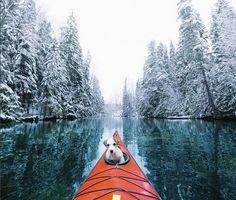 Kayak de mer, chien.