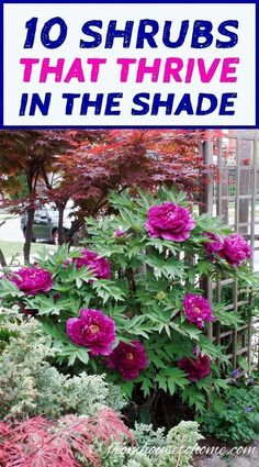 This list of shrubs is perfect for my shade garden. I wasn't sure how to fill in the garden bed and now I have a bunch of options. I really like the 4th one. #gardeninghowto #LandscapeShrubs #gardenshrubsshade #shadegardenshrubs