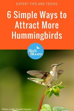 6 Simple Ways to Attract More Hummingbirds Hummingbird House, Hummingbird Flowers, Hummingbird Swing, Hummingbird Pictures, How To Attract Hummingbirds, How To Attract Birds, Attracting Hummingbirds, Flowers That Attract Hummingbirds, Homemade Hummingbird Food