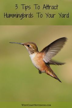 Want more hummingbirds in your garden? Here are some ideas #birdhouseideas