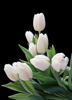 My favorite flower....white tulips