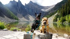 Ty and Buster at Lake Agnes - Lake Louise, AB