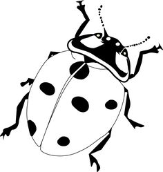 Ladybug outline realistic clipart ladybug pencil and in color realistic