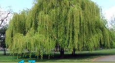 13 Trees You Should Never Plant In Your Yard  http://www.homeandgardeningideas.com/11-tree-plantation-choices-avoid-yard/