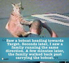 They've seen some pretty weird stuff through CCTV.