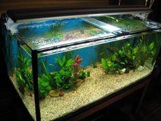 peceras decoradas con peces buscar con google