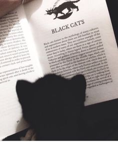 Black cat reading about black cats :) and like OMG! get some yourself some pawtastic adorable cat apparel! Crazy Cat Lady, Crazy Cats, Animals And Pets, Cute Animals, Funny Animals, Cat Reading, Reading Books, Reading Time, Photo Chat