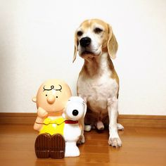 Charlie The Beagle & Charlie Brown..