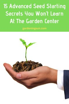 15 Advanced Seed Starting Secrets You Won't Learn At The Garden Center - Gardening Sun