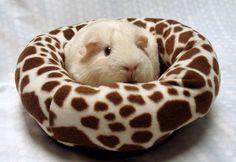 Round guinea pig bed.