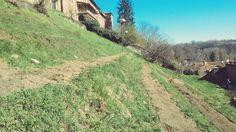il 28 marzo 2015 Francesco ha terminato la preparazione del terreno della vigna.