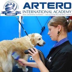 Alumna de Artero International Academy 2013, nos muestra sus prácticas de esta semana. Infórmate de nuestros cursos al 93 515 00 35. Disponemos de centros de formación en varias ciudades de España con horarios totalmente flexibles. Todas las clases del curso son prácticas con perro real.