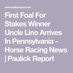 First Foal For Stakes Winner Uncle Lino Arrives In Pennsylvania - Horse Racing News | Paulick Report