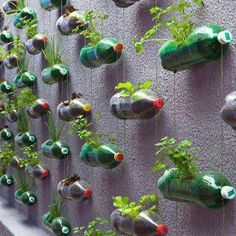 Recycling at it's best. What an awesome Herb Garden!