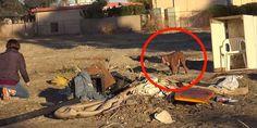 Abandoned Dog Gets a Big Surprise