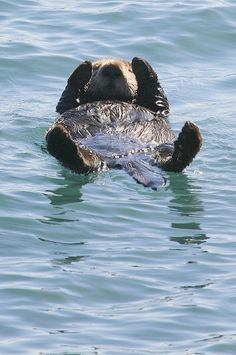 Sea otter. What a life!