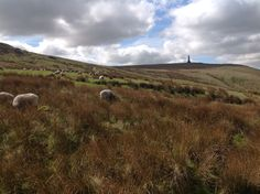 Stoodly Pike, Yorkshire
