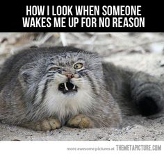 When someone wakes me up… truely!!