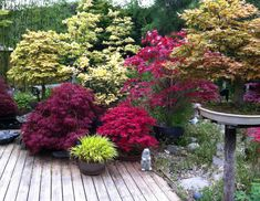 Trees, shrubs, ornamental grasses, bamboos and vines can all provide privacy in a garden. Evergreen plants are best for year-round color and screening. A hedge of multi-stemmed. Landscaping Around Patio, Privacy Landscaping, Garden Landscaping, Landscape Around Deck, Garden Privacy, Garden Shrubs, Garden Paths, Patio Plants, Tall Plants
