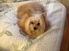 Magic says its time for a new bedspread!!! Fall in to Sew Fine for a cozy new bedding ensemble!!