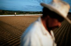 christopher anderson(1970- ), brazil. 2002. Coffee farming in the region of Cerrado of Brazil where Illy Cafe buys around 60% of their beans. After washing, coffee beans are spread out on concrete slabs to dry. | http://mediastore2.magnumphotos.com/CoreXDoc/MAG/Media/TR2/e/e/0/3/NYC53741.jpg