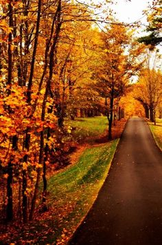 New England in the Fall, US. The east coast is on my bucket list for a fall adventure some day