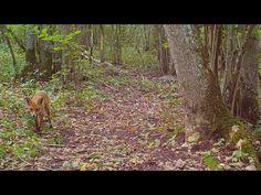 Rajakaamera: Rajakaamera Trail Camera, Youtube, Youtubers, Youtube Movies