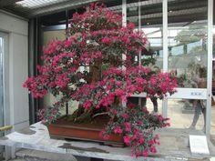 Visita al Crespi Bonsai Museum | Foto-diario di una giardiniera curiosa
