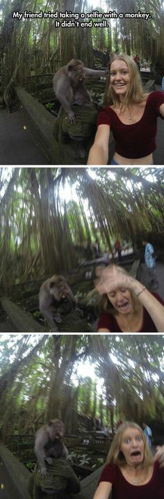 Funny pictures about Selfie With Monkey Goes Wrong. Oh, and cool pics about Selfie With Monkey Goes Wrong. Also, Selfie With Monkey Goes Wrong photos. Haha Funny, Funny Cute, Funny Memes, Funny Stuff, Funniest Memes, Humor Grafico, I Love To Laugh, Just For Laughs, Really Funny