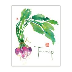 Vegetable art - Turnip watercolor painting - Green botanical Kitchen decor