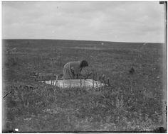 'Woman tanning' ~ (Blackfeet) ~ Montana c1907 Glass Negative: Walter McClintock
