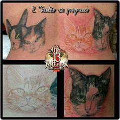 Tattoo Gatinhos  2 Sessão em progresso