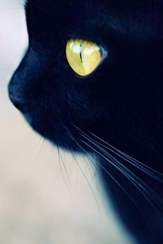 Black cat's face with yellow eyes