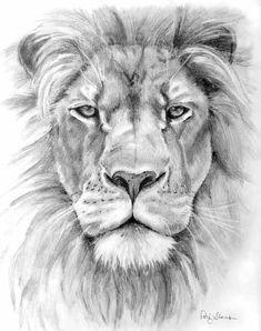 Resultado de imagem para lion drawing