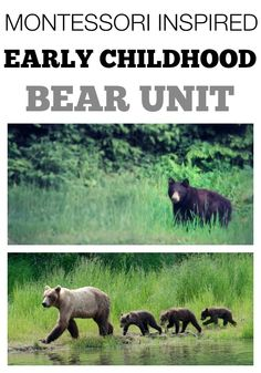 Montessori Inspired Bear Unit for Early Childhood. Perfect for a Preschool Unit on Hibernation.