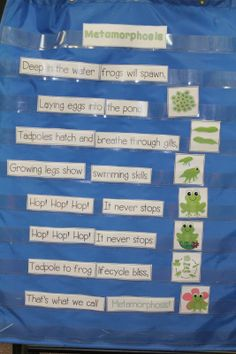 Frog Frenzy!  This song was a class favorite! We put all of the pieces in a pocket chart and sang the song each morning during Shared Reading.
