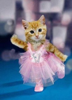 Tutu Cat Kittens Cutest, Cats And Kittens, Cute Cats, Funny Cats, Animals And Pets, Baby Animals, Funny Animals, Cute Animals, Funny Costumes