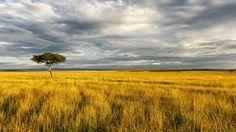 aos.iacpublishinglabs.com question aq 1400px-788px natural-resources-african-savanna_5e4deadc068a7348.jpg?domain=cx.aos.ask.com
