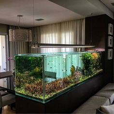 "9,550 Likes, 42 Comments - Aquarium Hobby (@aquariumhobby) on Instagram: ""This is one of the more impressive aquariums on Instagram. Very cool setup. ----Photo from…"" Saltwater Tank, Saltwater Aquarium Setup, Tropical Fish Aquarium, Aquarium Fish Tank, Aquarium Design, Home Aquarium, Nature Aquarium, Aquarium Terrarium, Planted Aquarium"