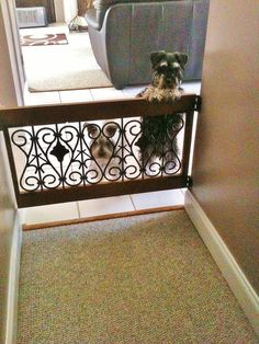 Decorative dog gate-I LOVE it & them ;)