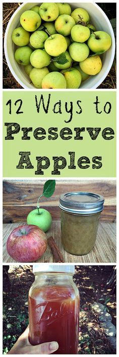 Here are some great ways to preserve apples during the harvest season!