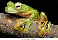 Картинки по запросу frog feet