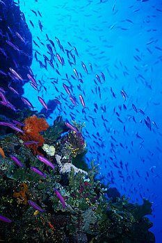 Great Barrier Reef, Queensland, Australia #pinuplive