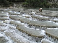 Baishuitai, also known as the White Water Terraces, is located in the foothills of the Haba Snow Mountains, 101 kilometers (about 62 miles) southeast of the Shangri-la County. Snugly carved into a mountain slope some 2400 meters above sea level, Baishuitai, from its base to its top, measures 140 meters and spans some 160 meters in width at its widest place, making Baishuitai the biggest limestone terraces in China.